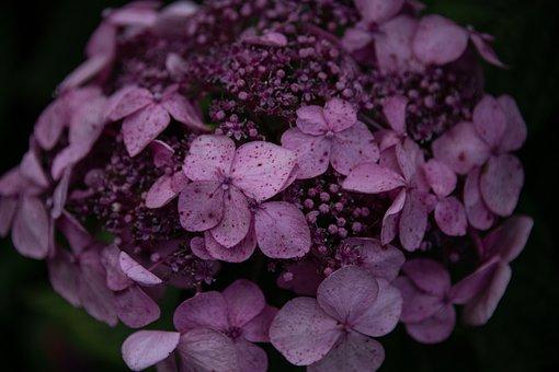 Flower, Plant, Garden, Pretty, Blossom, Colorful, Bloom
