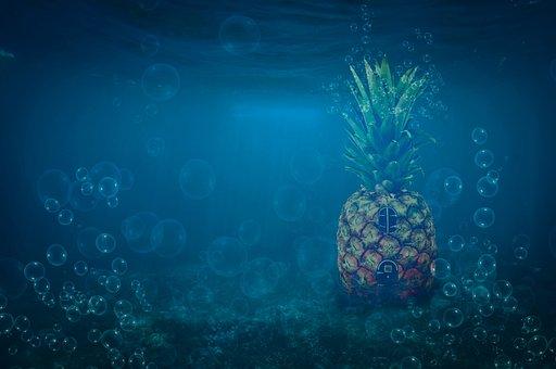 Sponge Bob, House Of Sponge Bob, House Pineapple