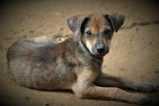 Dog, Pet, Mammal, Trust, Cute, Concerns, Attention