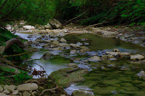 River, Water, Forest, Landscape, Nature, Outdoors