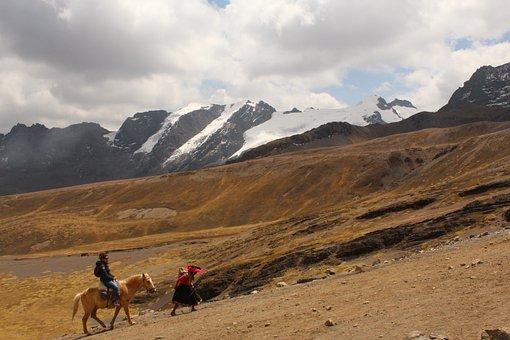Horse, Snow, Landscape, Winter, Work