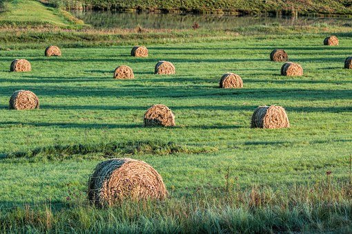 Bales, Fodder, Hay, Cattle Feed, Farm, Agriculture