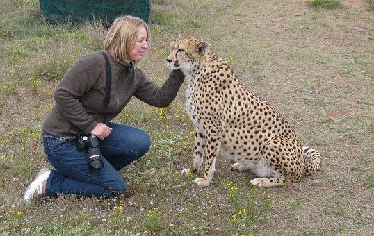 Cheetah, Animal, Predator, Animal World, Wild Animal