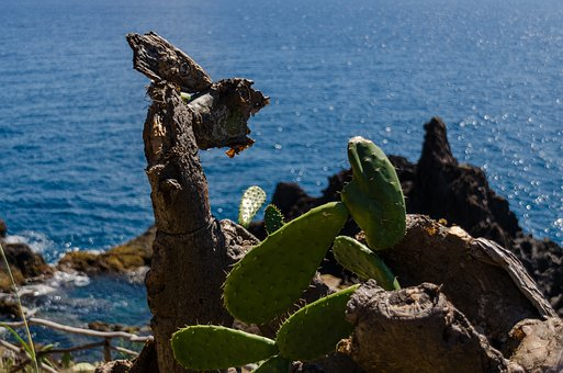 Cactus, Cliff, Sea, Atlantic, Atlantic Ocean, Funchal