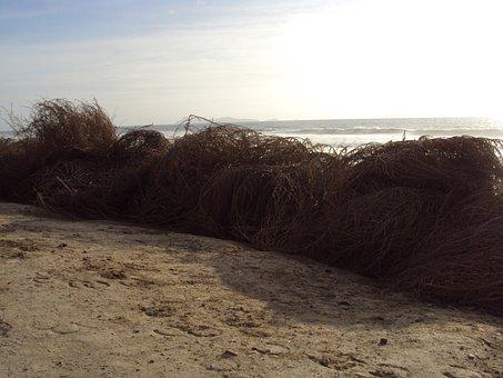 Bare Branches, Seashore, Tijuana, Autumn, Horizon