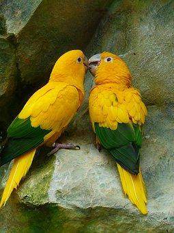Gold Parakeets, Bird Couple, Couple, Birds, Yellow