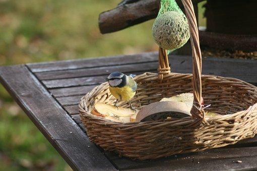 Blue Tit, Tit, Bird, Feeding Place, Winter, Nature