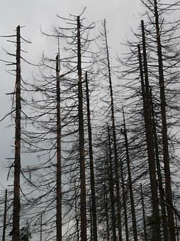 Waldsterben, Dead, Death, Dead Trees, Dead Wood, Storm