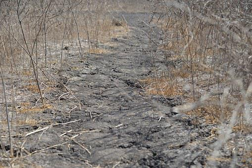 Drought, Away, Dry, Vegetation, Nature, Plant