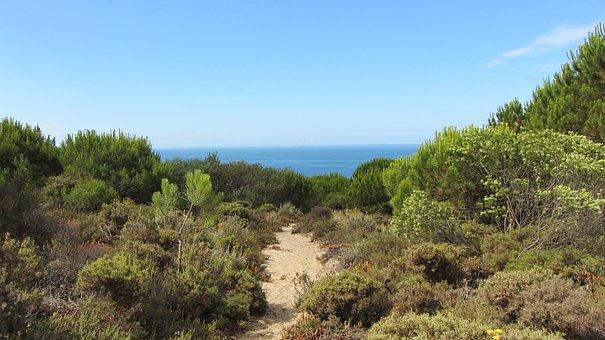 Portugal, Costa Da Caparica, Dunes, Beach, Atlantic
