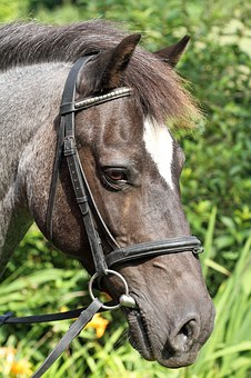 Animal, Bridle, Equestrianism, Equitation, Face, Horse
