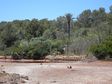 River, Riverbed, Dehydrated, Mediterranean, Flora