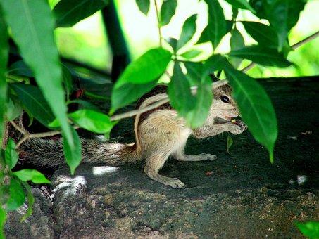 Squirrels, Hiding, Animals, Mammals, Furry, Furs, Bushy