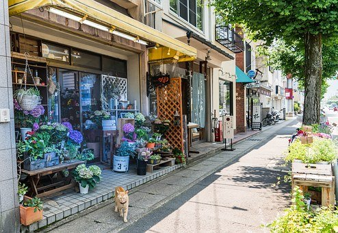 Japan, Arashiyama, Flower Shop, Kyoto, Cat, Japanese