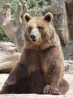 Bear, Squatting, Fur, Outdoor, Large