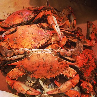Maryland, Crabs, Steamed
