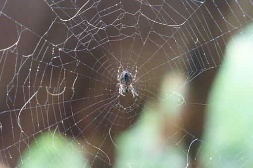 Spider, Network, Center, Middle, Animal, Nature, Photo