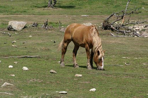 Horse, Pasture, Field, France, Grass, Animal, Pre
