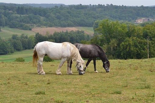 Horses, Animals, Nature, Mare, Landscape, Pre, Prairie