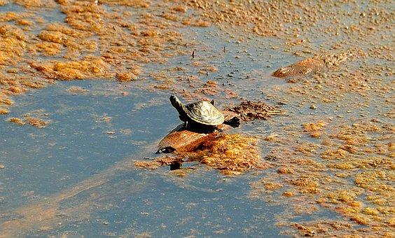 Turtle, Stretch, Legs, Lake, Log, Hang, Sit, Float