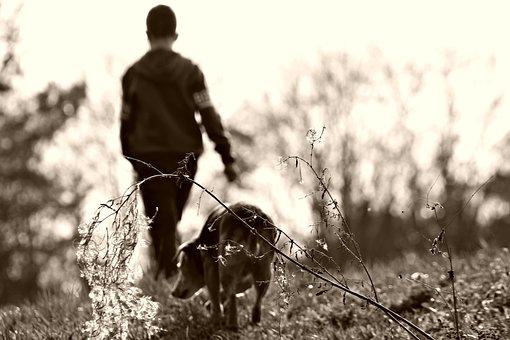 Walk, Field, Kid, Child, Dog, Pets, Cute, Boy