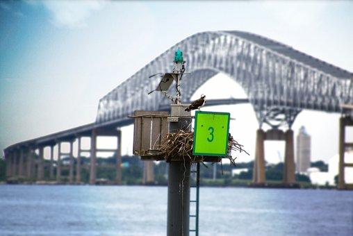 Bird, Water, Bridge, Maryland, Inner Harbor, Key Bridge