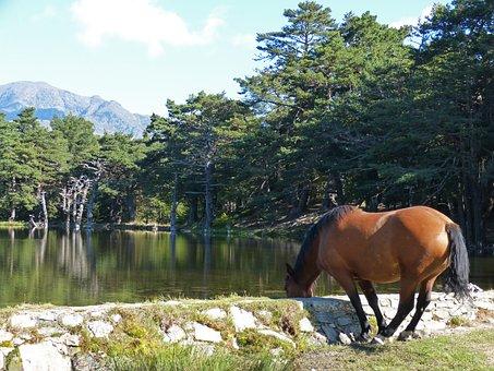 Horse, Watering Is, Water Trough, Bassa D'oles