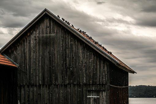 Pigeons, Scale, Wood Shed, Wood, Wooden Slats, Ammersee