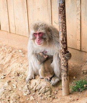 Monkey, Mother, Baby, Animal, Wildlife, Mammal, Young