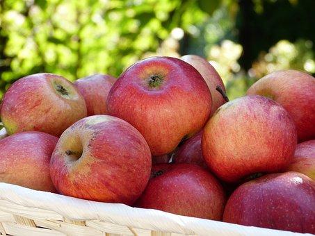 Apple, Red, Basket, Garden, Harvest, Ripe, Fruit Tree