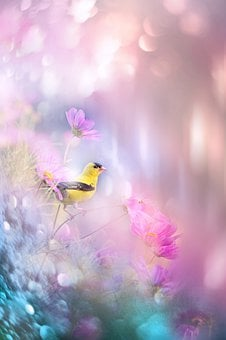 Nature, Landscape, Bird, Animal, Flowers, Light