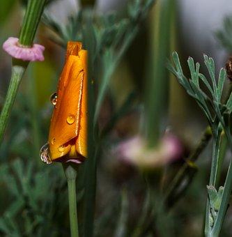 Flower, Blossom, Bloom, Orange, Water, Drop Of Water