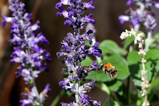 Hummel, Pollination, Insect, Collect
