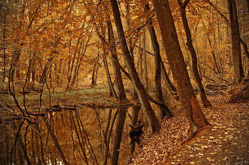 Forest, Trees, River, River Landscape, Bach, Creek