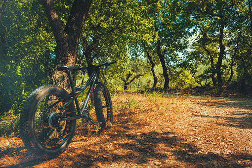 Bicycle, Bike, Fat Bike, Forest, Nature, Green, Cycling