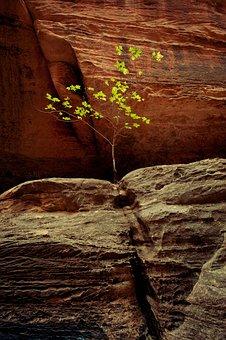 Hiking, Desert, River, Utah, Landscape, Nature, Travel