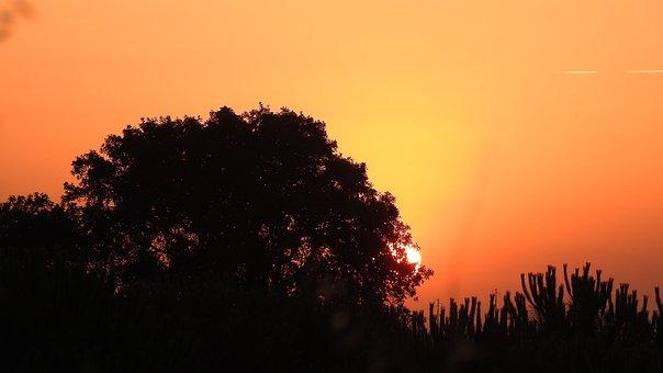 Eventide, Nature, Sky, Sol, Orange, Sunset, Trees