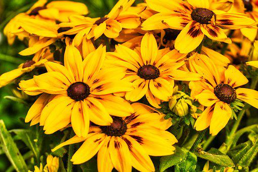 Flowers, Yellow, Federal Government, Nature, Summer
