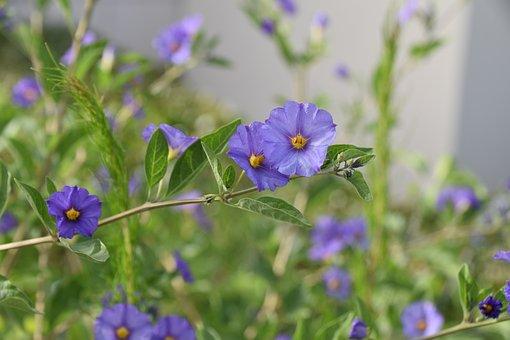 Flowers, Flora, Floral, Green Leaves, Garden