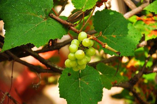 Fruits, Grapes, Green Grapes