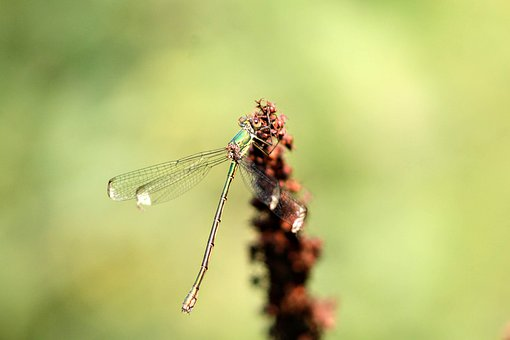 Dragonfly, Nature, Close Up, Wing, Macro, Insect