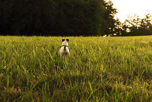 Jack Russel, Dog, Hunting, Cute, Animals, Terrier