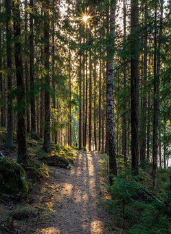 Forest, The Path, Light, Spring, Nature, Tree, Sunbeam