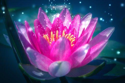 Lotus, Water Lily, Pink, Flower, Pond, Meditation