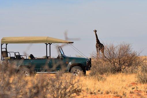 Giraffe, Safari, Africa, Savannah, Wilderness, Nature