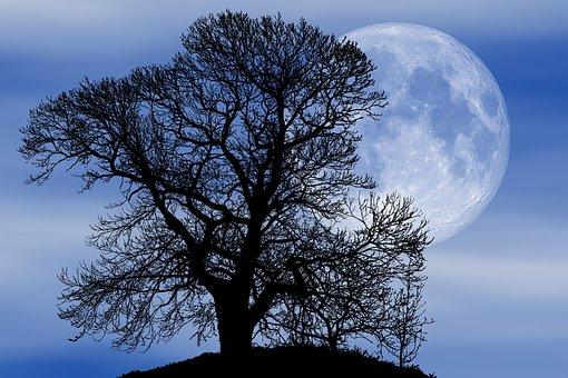 Nature, Tree, Silhouette, Dusk, Full Moon, Fantasy