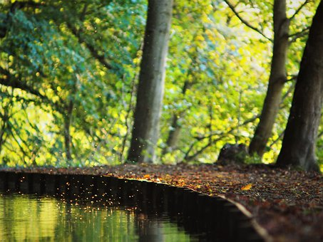 Forest, Bach, Leaves, Trees, Landscape, Nature, Water