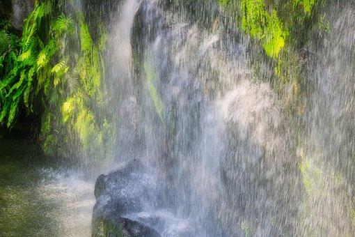 Tropical, Outdoor, Water, Spring, Leaf, Landscape