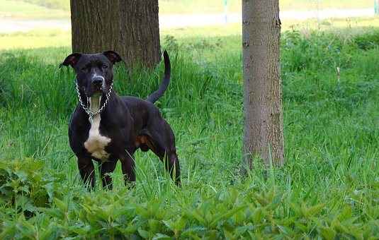 Dog, Pet, Animal, Animal Portrait, Quadruped