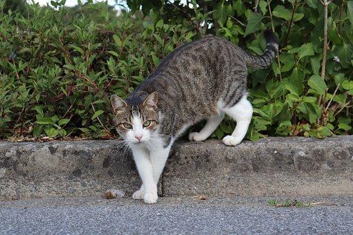 Cats, Felines, Pets, Predators, Hunter, Mouse, Rodent